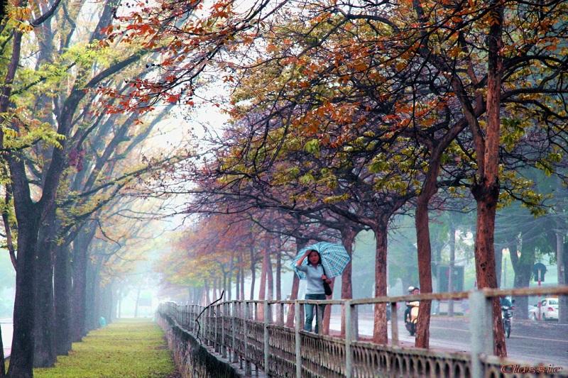 Địa điểm đẹp ở Hà Nội Phố Kim Mã
