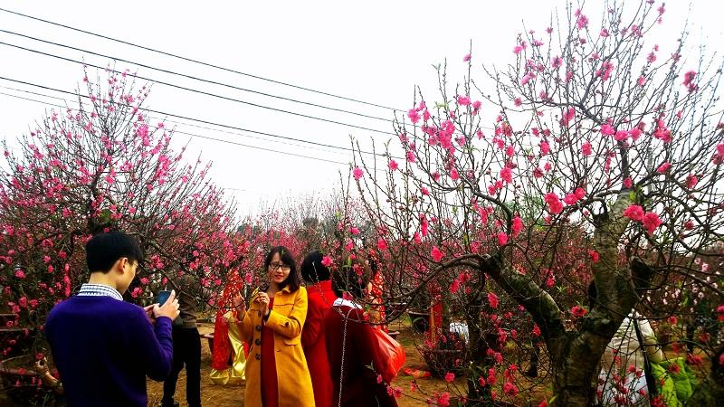 Địa điểm đẹp ở Hà Nội Vườn Hoa Nhật Tân